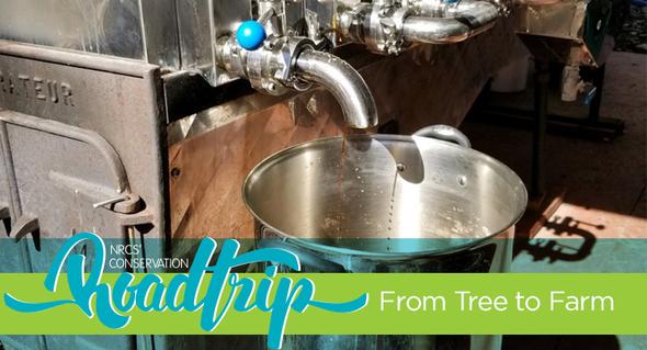 birch syrup evaporator