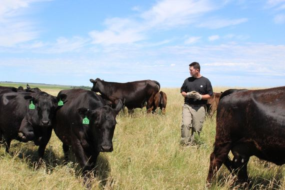Rotational Grazing