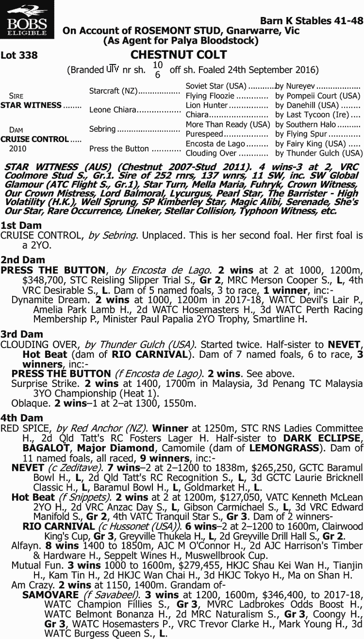 hight resolution of inglis 2018 classic yearling sale lot 338 star witness x cruise control