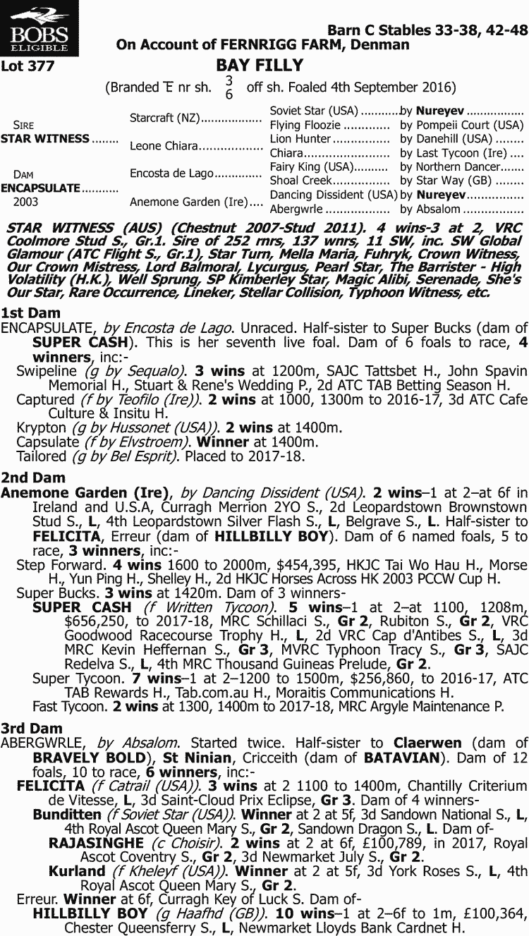medium resolution of inglis 2018 classic yearling sale lot 377 star witness x encapsulate