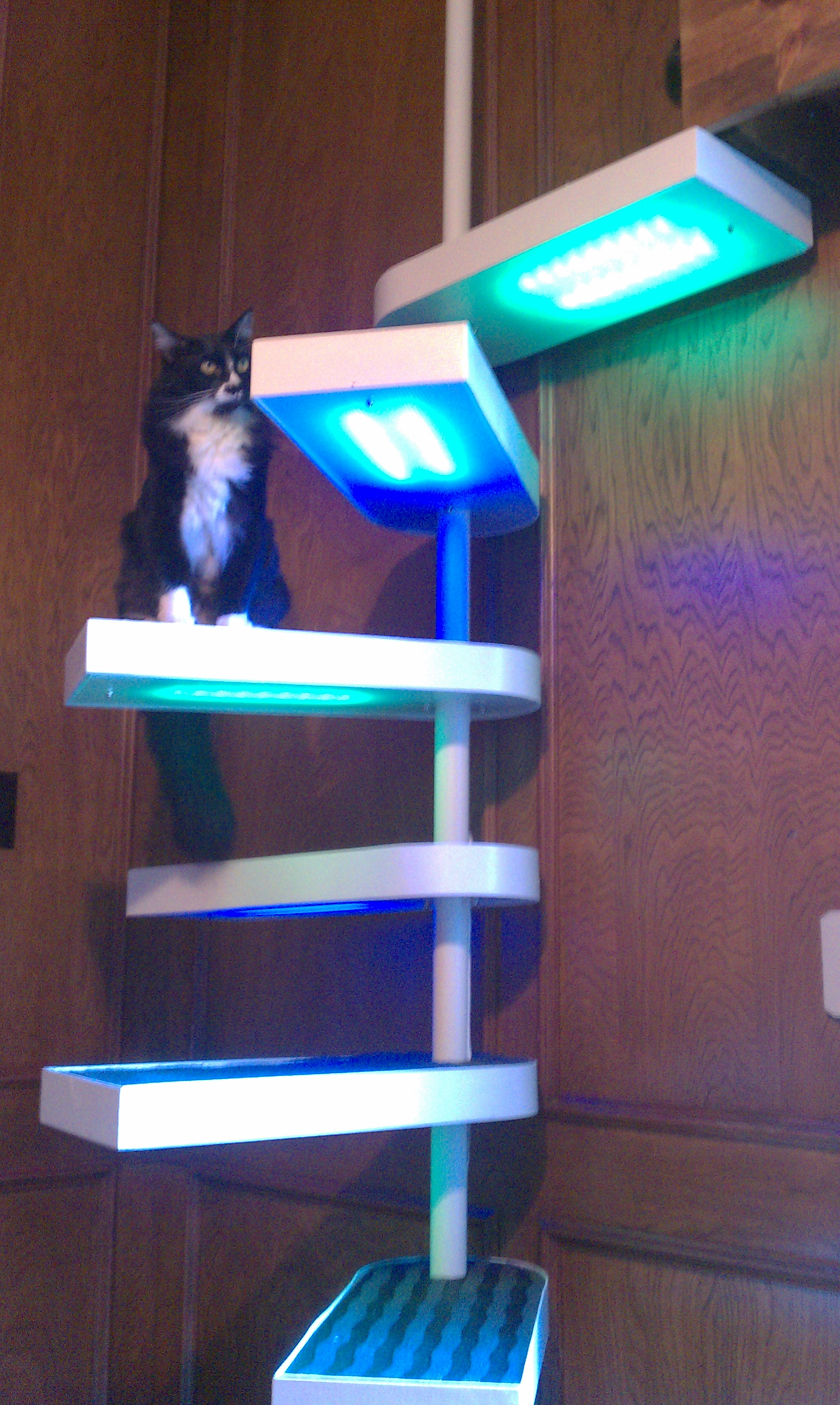 Cat Staircase Deluxe 25 Steps With Pictures Instructables