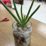 Ornamental Aloe Vera 4 Steps Instructables