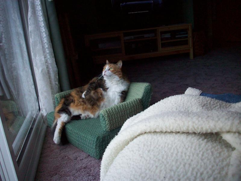 crocheted kitty couch pet