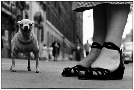 Son of Bitch – Elliott Erwitt's dog photos