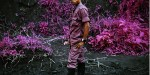 Richard Mosse's Infra - a gallery of Aerochrome photo- journalism from the Congo