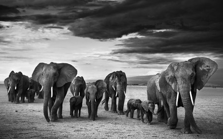 In pictures: David Yarrow's Kenyan Collection