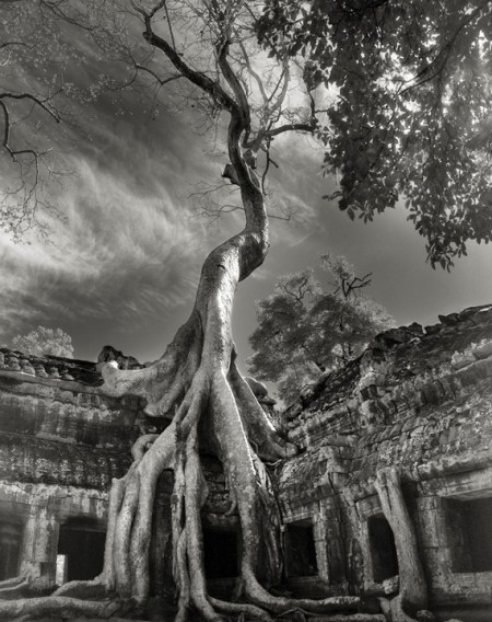 Beautiful dark twisted fantasies: the world's most ancient trees