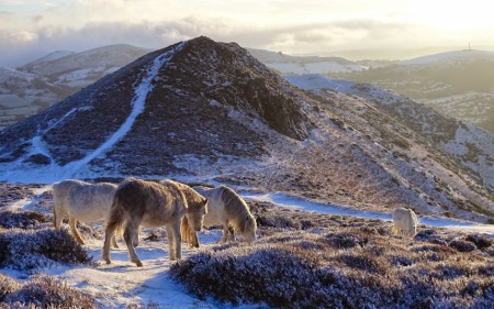 Britain gripped by deep freeze: Winter weather scenes across UK