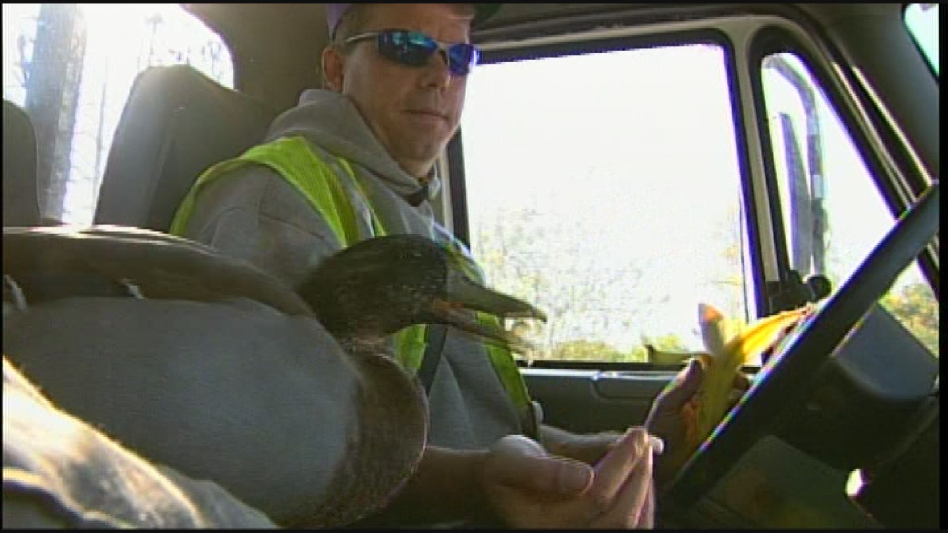 Frank The Duck In The Trucks