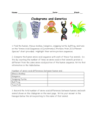 Cladograms And Genetics Worksheet Answers | myideasbedroom.com