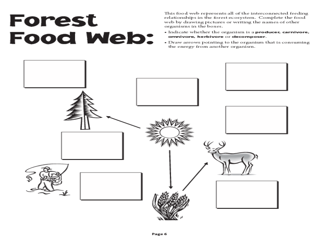 Food Chains Worksheet Full Sizes