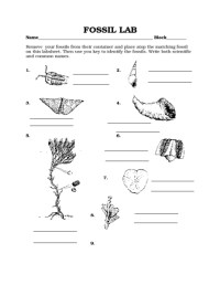 Fossil Worksheet Free Worksheets Library | Download and ...