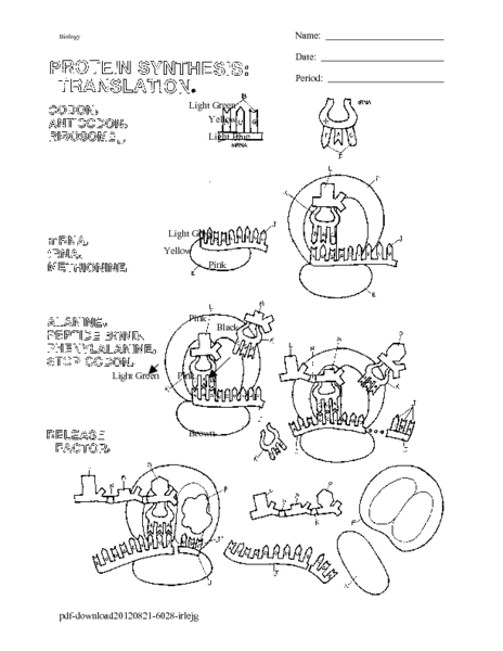 Dna Transcription Coloring Worksheet 84 Coloring Pages