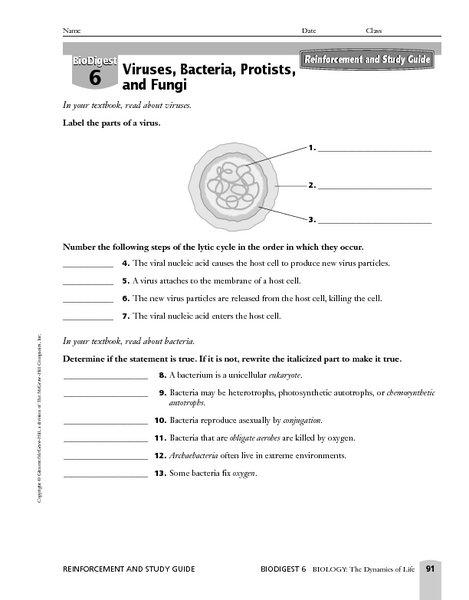Viruses and Bacteria Worksheets