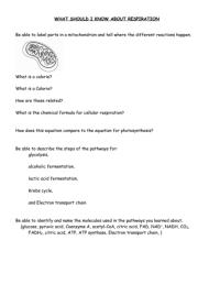 All Worksheets  Cellular Respiration Worksheets For ...
