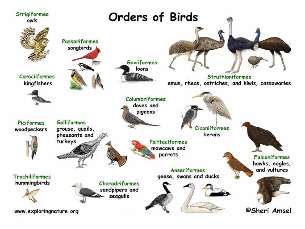 medium resolution of Bird Classification Worksheet for 4th - 6th Grade   Lesson Planet