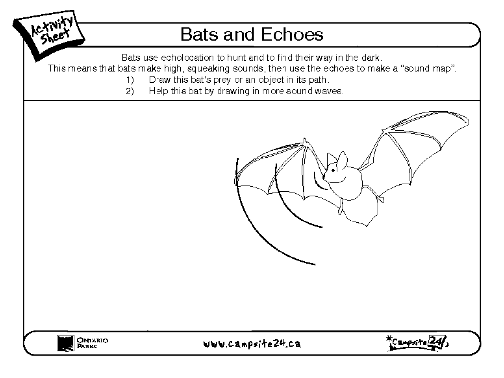 Bats and Echoes Worksheet for 2nd - 4th Grade   Lesson Planet [ 768 x 1024 Pixel ]