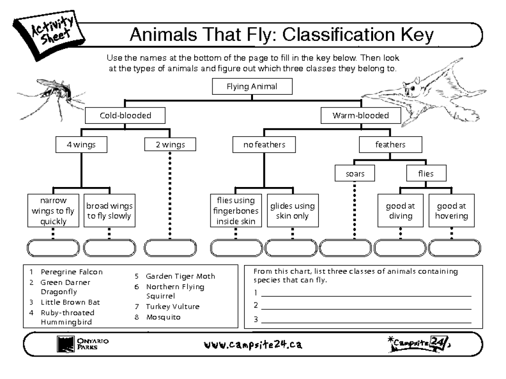 Animals That Fly-Classification Key Worksheet for 3rd - 5th Grade   Lesson  Planet [ 768 x 1024 Pixel ]