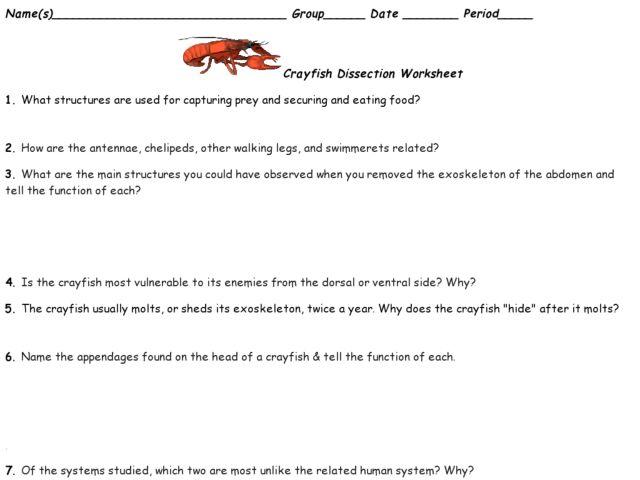Crayfish Dissection Worksheet Photos