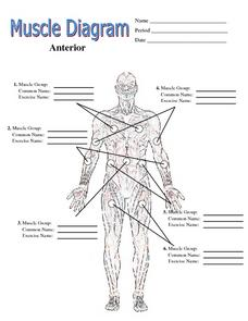 Muscle Diagram Worksheet for 6th  12th Grade | Lesson Pla