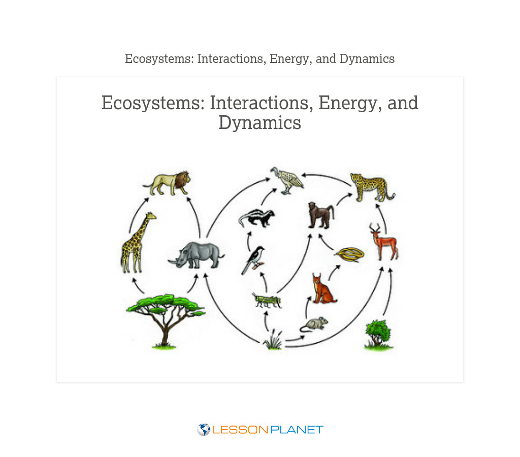 small resolution of Ecosystem Lesson Plans \u0026 Worksheets   Lesson Planet