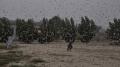 باكستان: حالة طوارئ وطنية بسبب الجراد