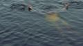 القصرين: سباحة جماعية في البحيرة تنتهي بكارثة..