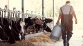 توقف منتظر لنشاط منظومة الحليب