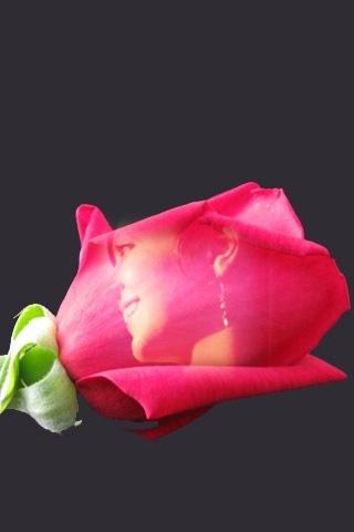 Sinestesia: Rosa Rossa Fresca Morbida