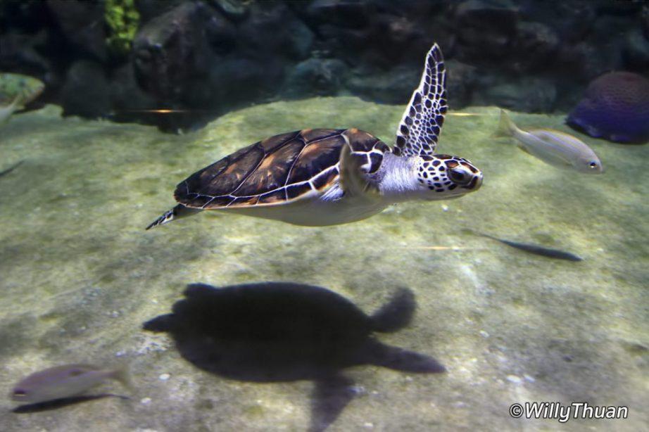 Phuket Aquarium at Cape Panwa
