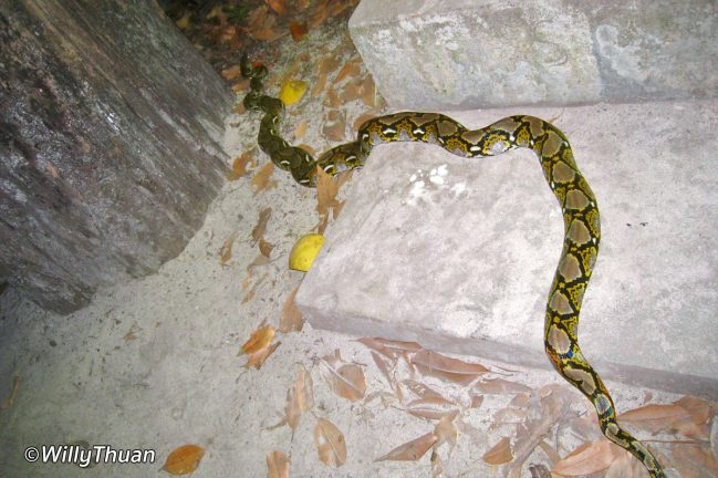 Snake on Similan Island