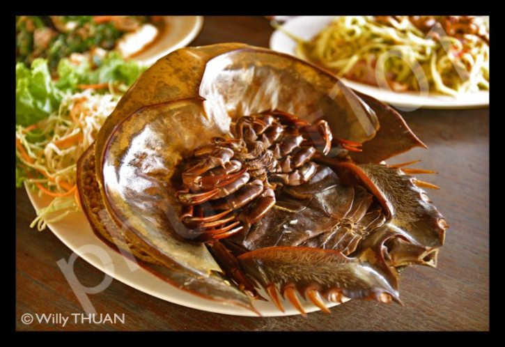 mang-da-talay-crab