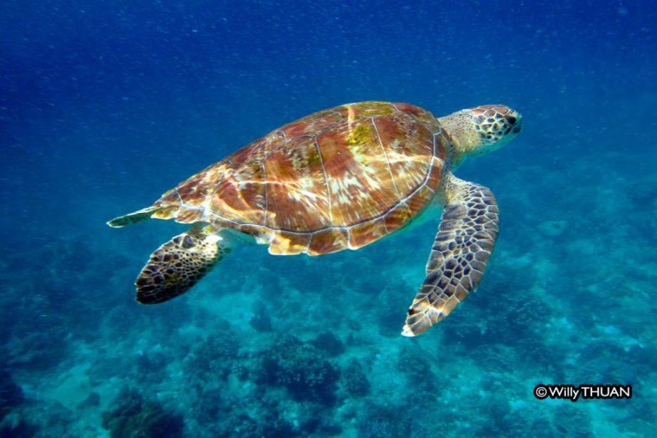 Snorkeling in the Similan Islands