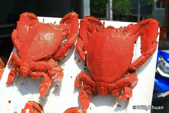 coconut-crabs