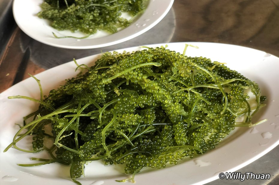 Green Caviar - Caulerpa lentillifera