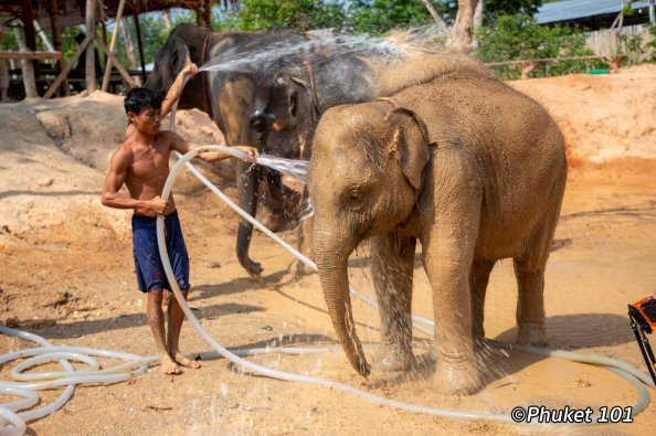 phuket-elephant-retirement-camp-12