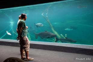 aquaria-freshwater