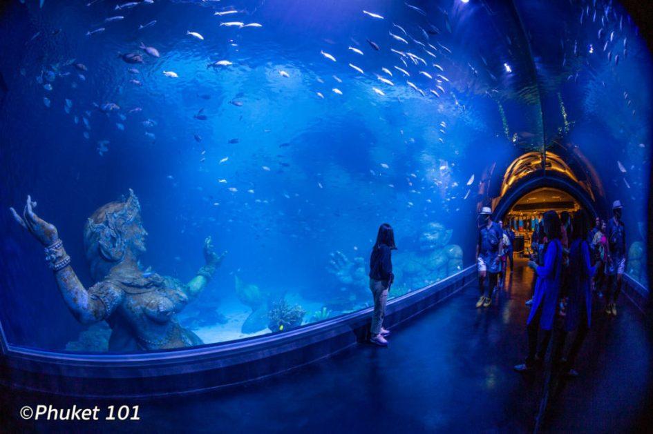 Aquaria semi tunnel aquarium