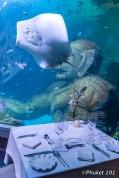andasi-at-aquaria-dinner-2
