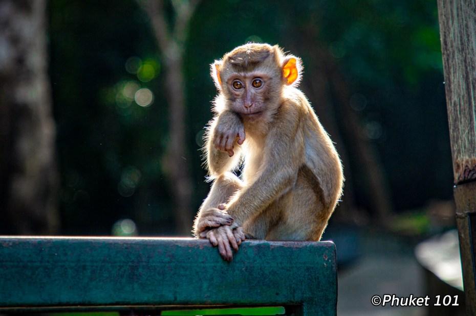 monkeys-hill-phuket-2