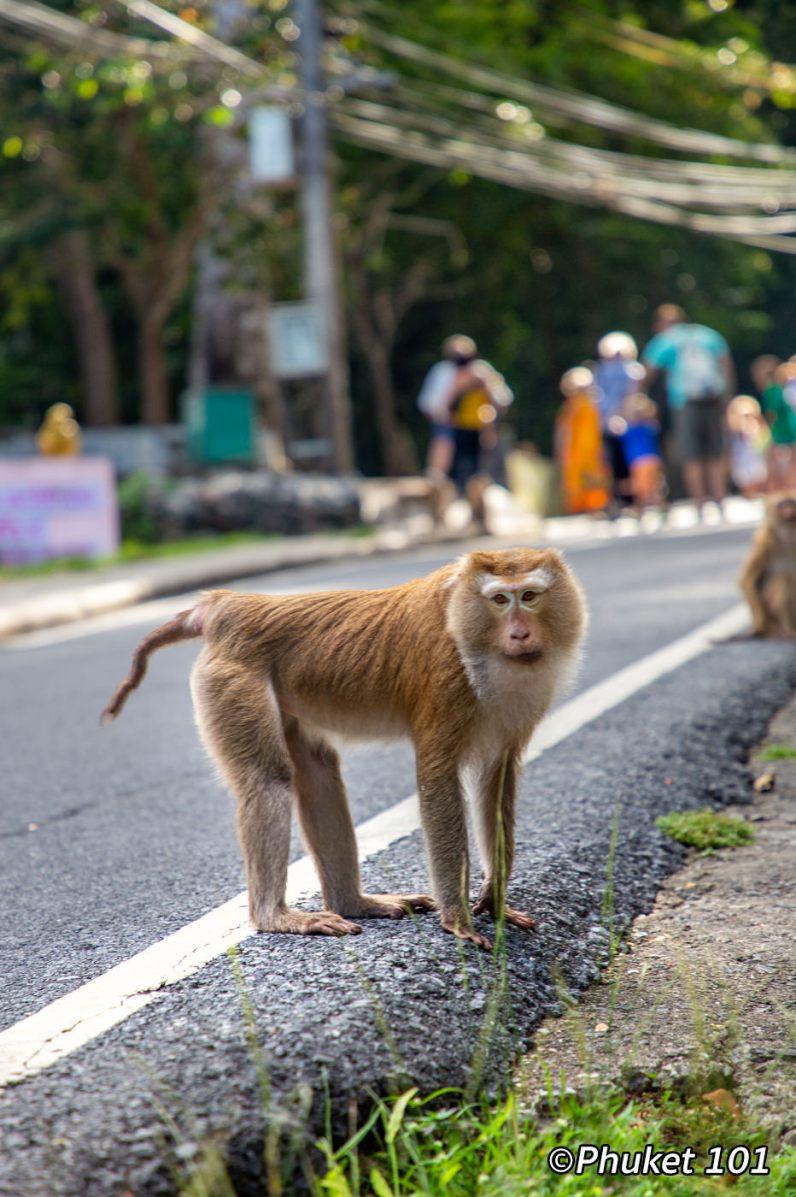 monkeys-hill-phuket-7