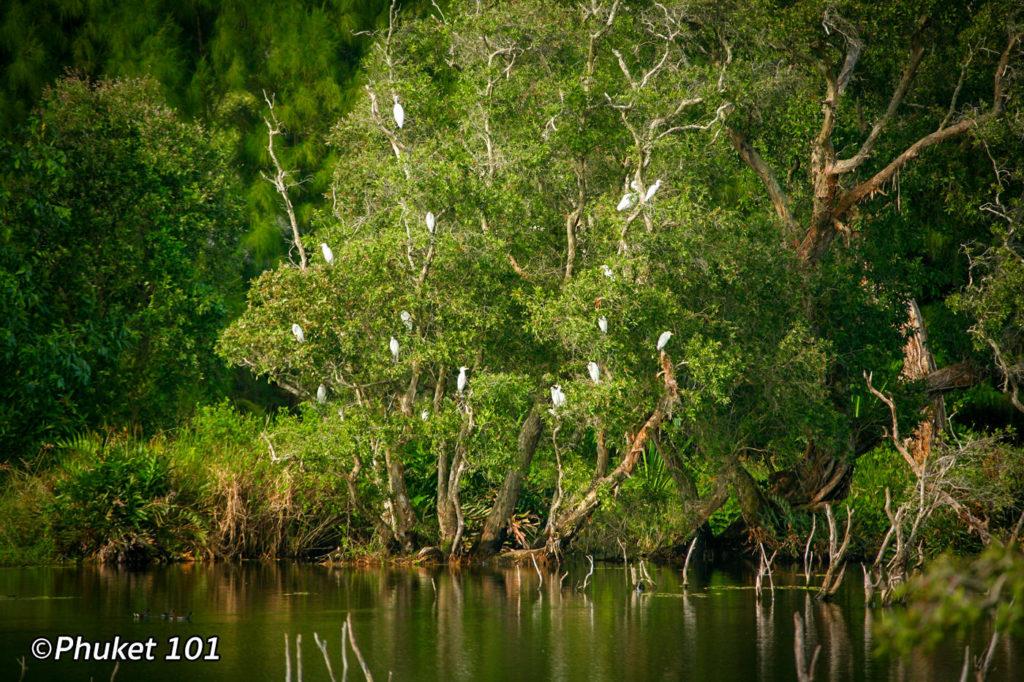Wat Mai Khao Bird Sanctuary