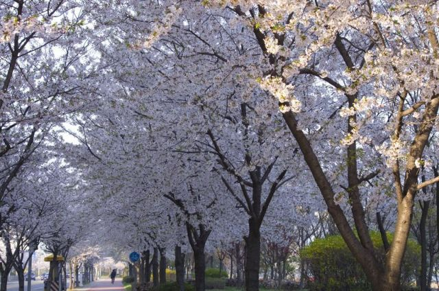 韓國免費景點鞍山公園