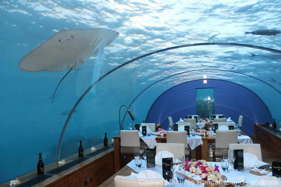 Best Fish Restaurants Auckland