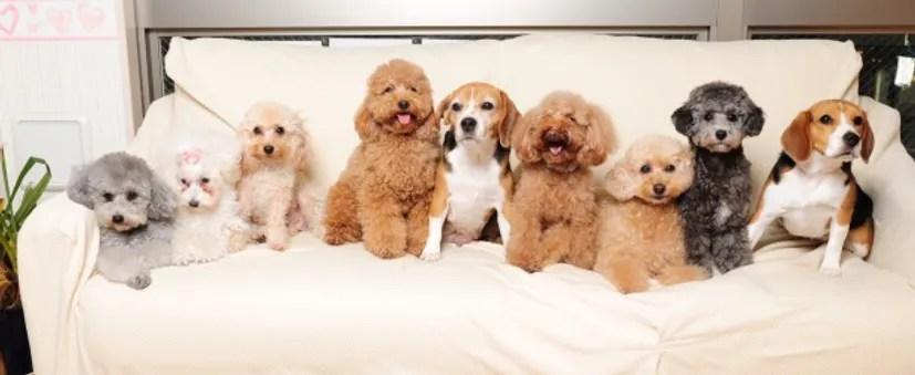 Dog Heart Cafe Tokyo