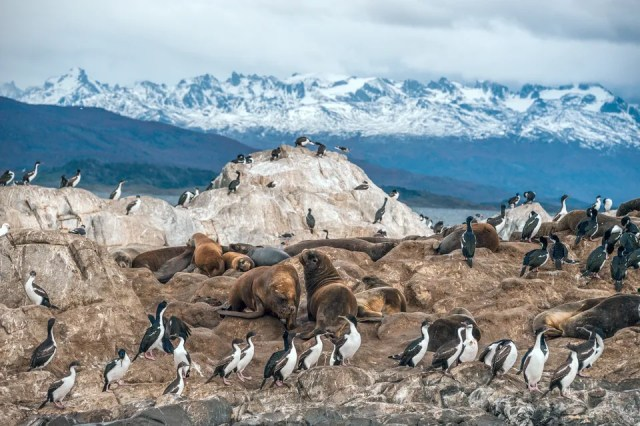 Seabirds and seals in Tierra del Fuego National Park, Argentina