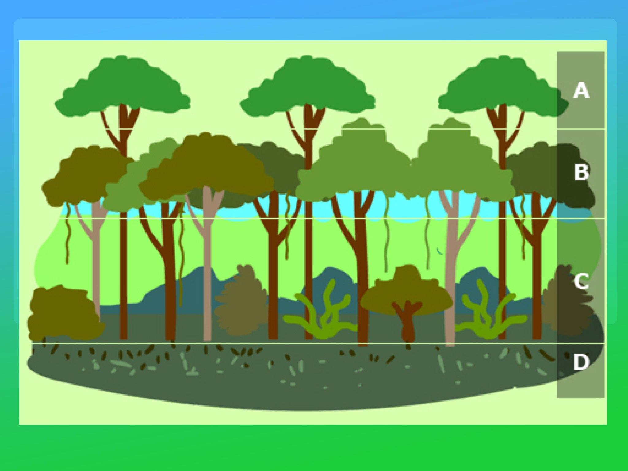 Play Rainforest Layers Quiz By Y6f Y6f