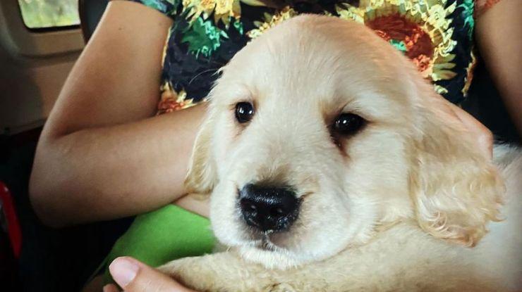 Puppy Tarzan