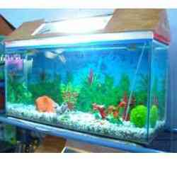 fish aquarium home malviya