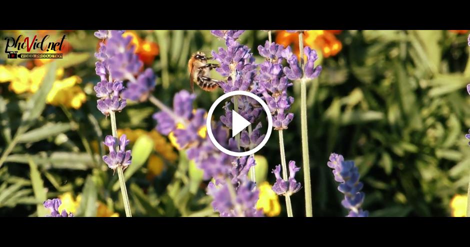 Tauriņi un bites tuvplānā 2017